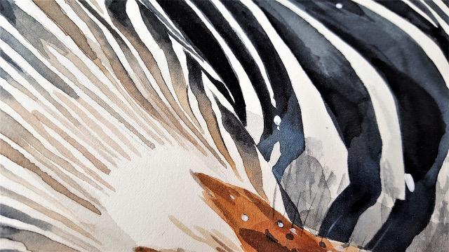 Annesaci-enfants-zebre
